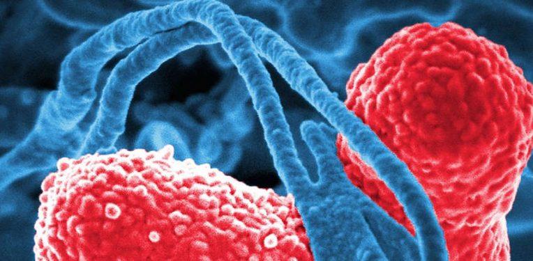 antibiotic-resistance-biosensor-freiburg