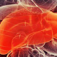 liver-anatomy-organs-sebastian-kaulitzki-fi