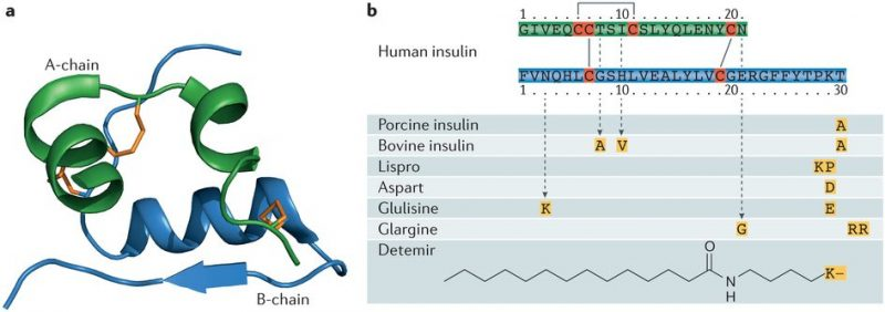 Insulin modifications for diabetes