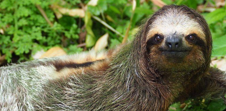 sloth-kristel-segeren-fi