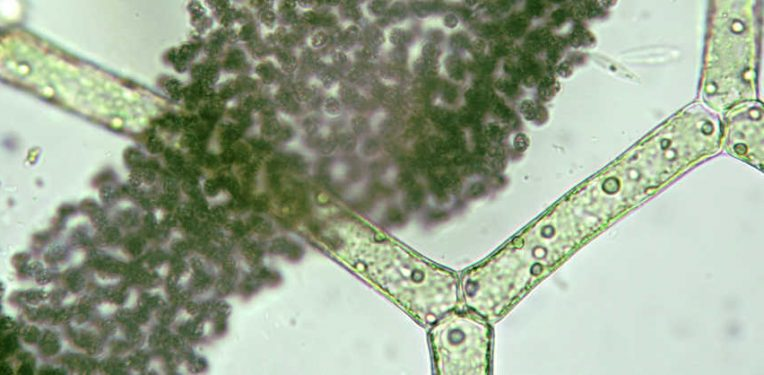 photanol-cyanobacteria-platform-synbio-bioplastics