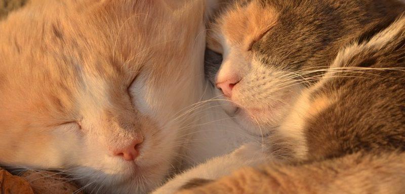 Circassia cat allergy medical fails
