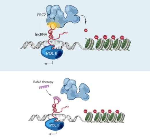 Shire RaNA RNA therapy