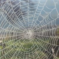 Nottingham spider silk