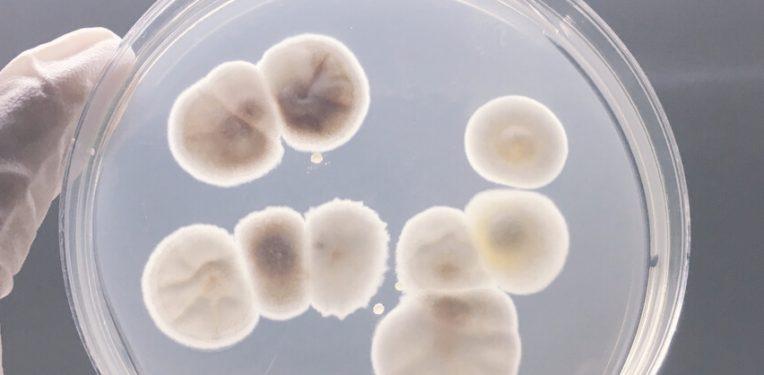 Roche-Discuva-Bacterial-Resistance