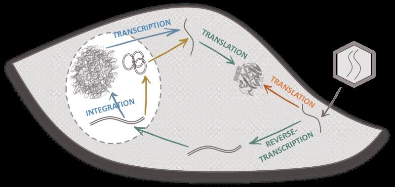 geg tech optogenetics lentiviral vector