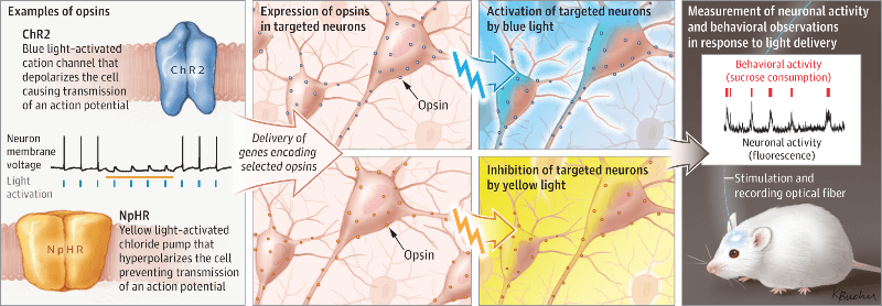 geg-tech optogenetics lentiviral vectors