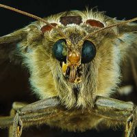 genetically modified insects gmo organic food