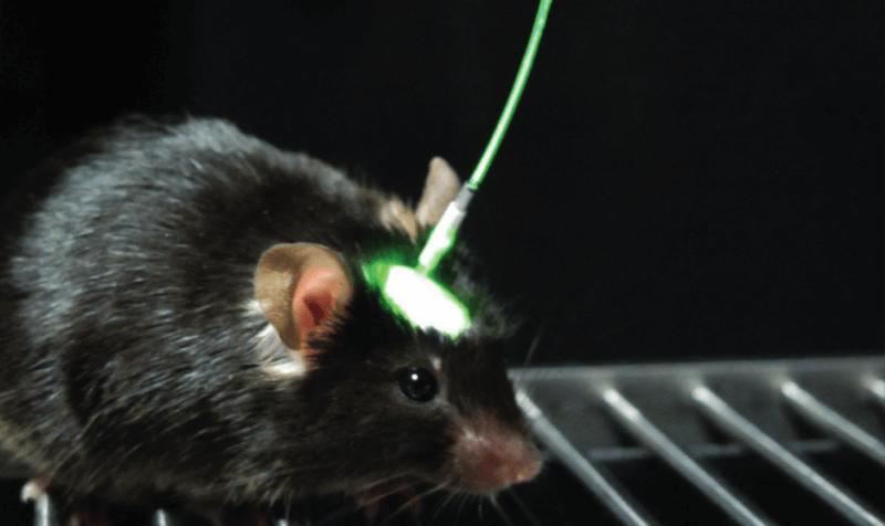 optogenetics GEG-Tech mouse