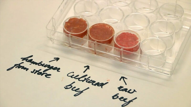 cultured meat lab-grown meat market 2020