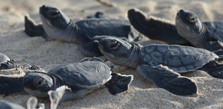 Galapagos filgotinib new trials