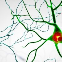 review-multiple-sclerosis-ocrevus