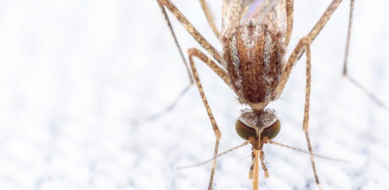 Oxitec Zika Dengue Brazil
