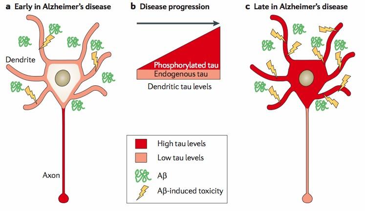 axon neuroscience dementia vaccine tau protein
