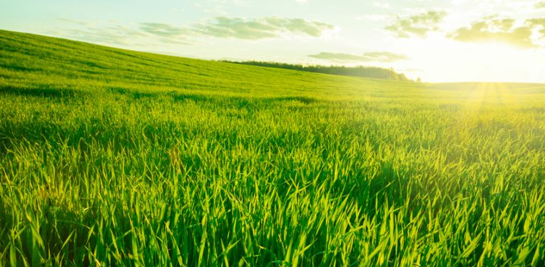 university ghent grassoline grass biofuel