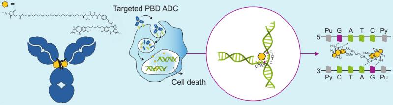 ADC Therapeutics ADCT-301 lymphoma