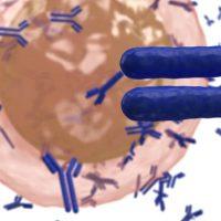 ADC Therapeutics lymphoma ADCT-301