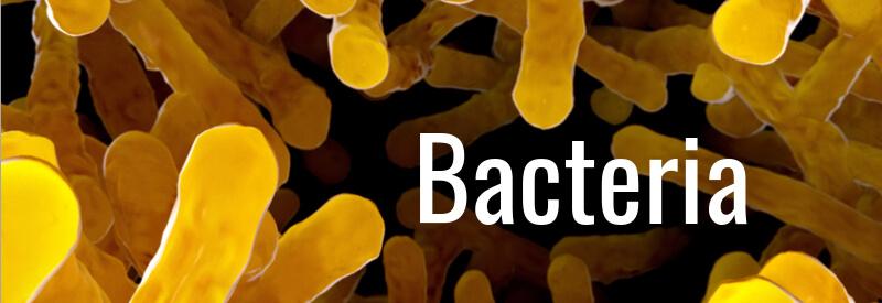 ASCO 2017 European biotech bacteria