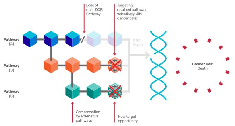 Artios Pharma DDR Cancer