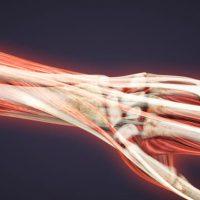 Basel University Muscular Dystrophy