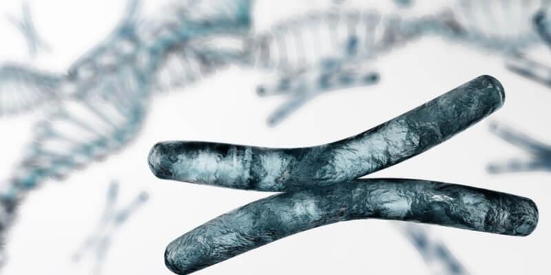 DNA-GMO