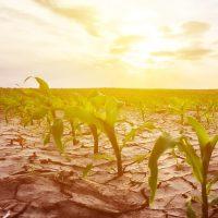 Gene-Editing-GMO-Review