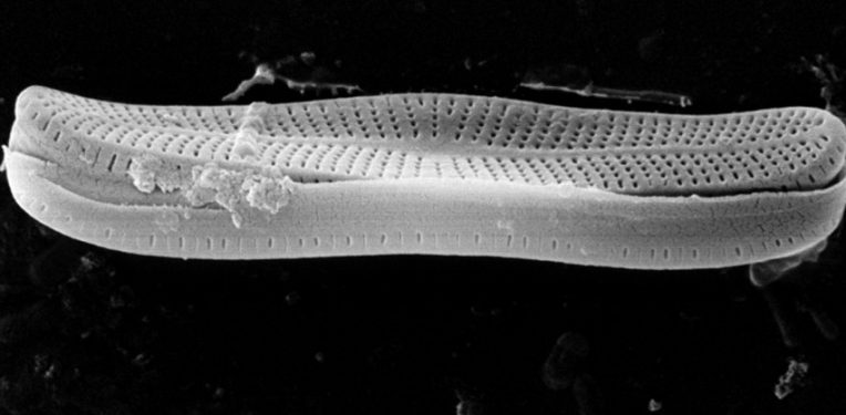 thought collider diatoms spain leon