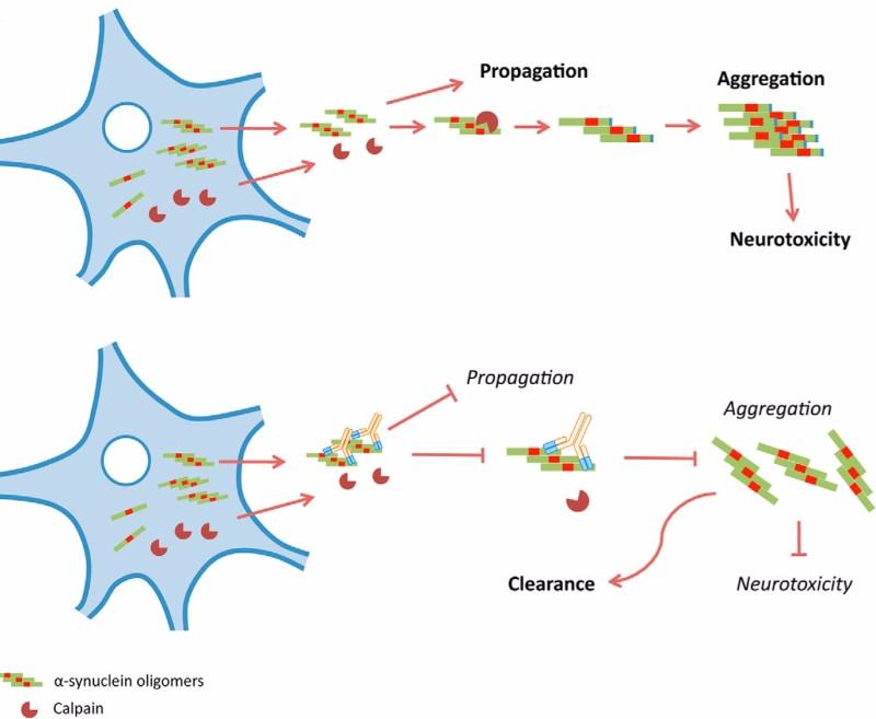 Parkinsons Prothena Roche Antibody