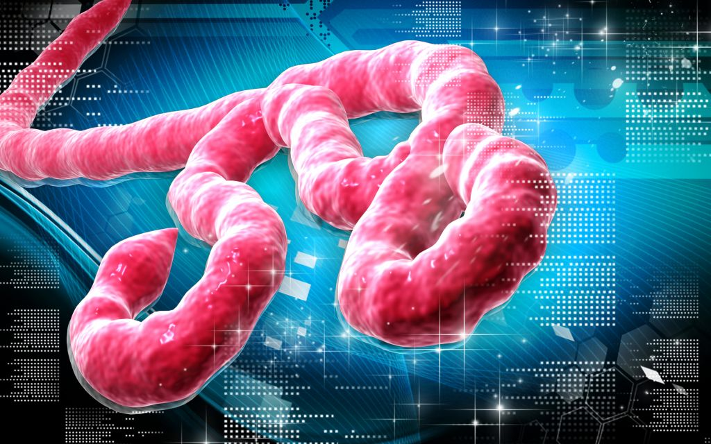 the discovery of the ebola virus in early nineties The belgian scientist who co-discovered the ebola virus in for ebola to spread, says virus in the 1990s and the early part of.