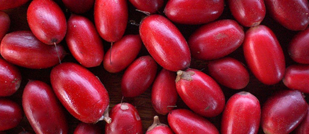 The Miracle Berry Which Hacks Your Taste Buds To Replace Sugar