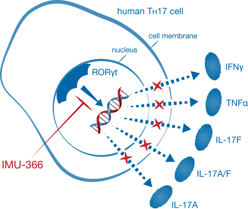 immunic therapeutics imu366