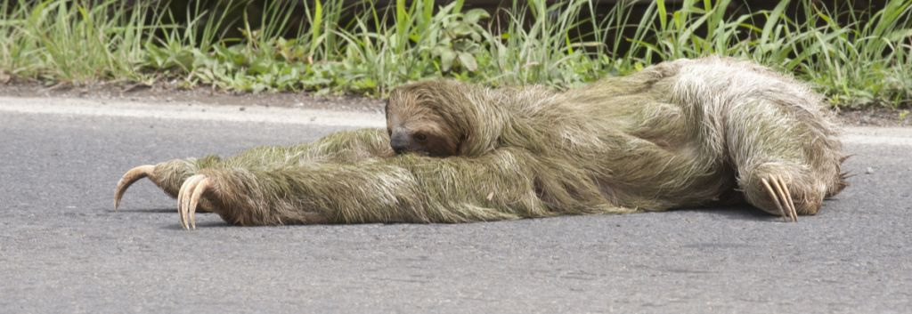 Searching like a Sloth? Speed it up With These Job ...