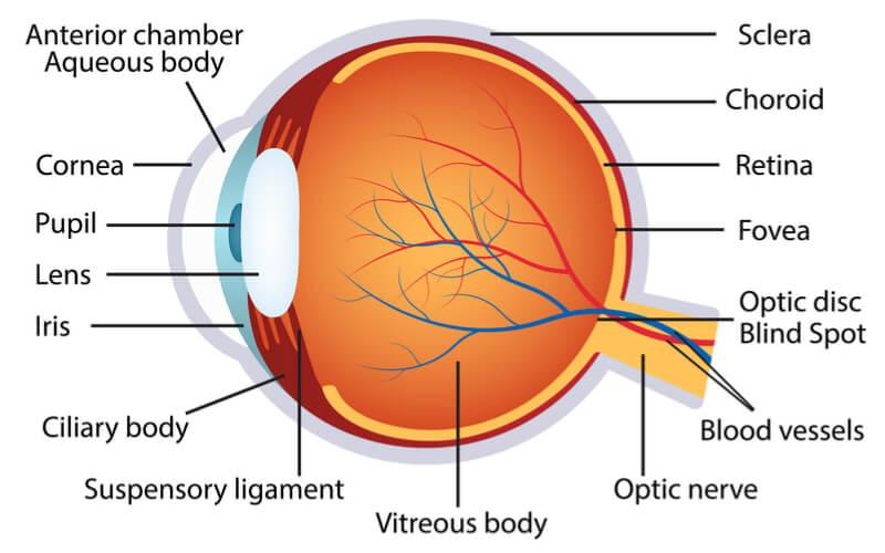 biogen-nightstar-blindness-gene-therapy