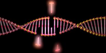 Cancer Treatment Targeting DNA Repair is Tested in Humans for the First Time