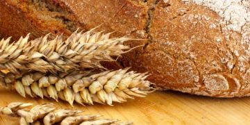 CRISPR wageningen netherlands gluten wheat